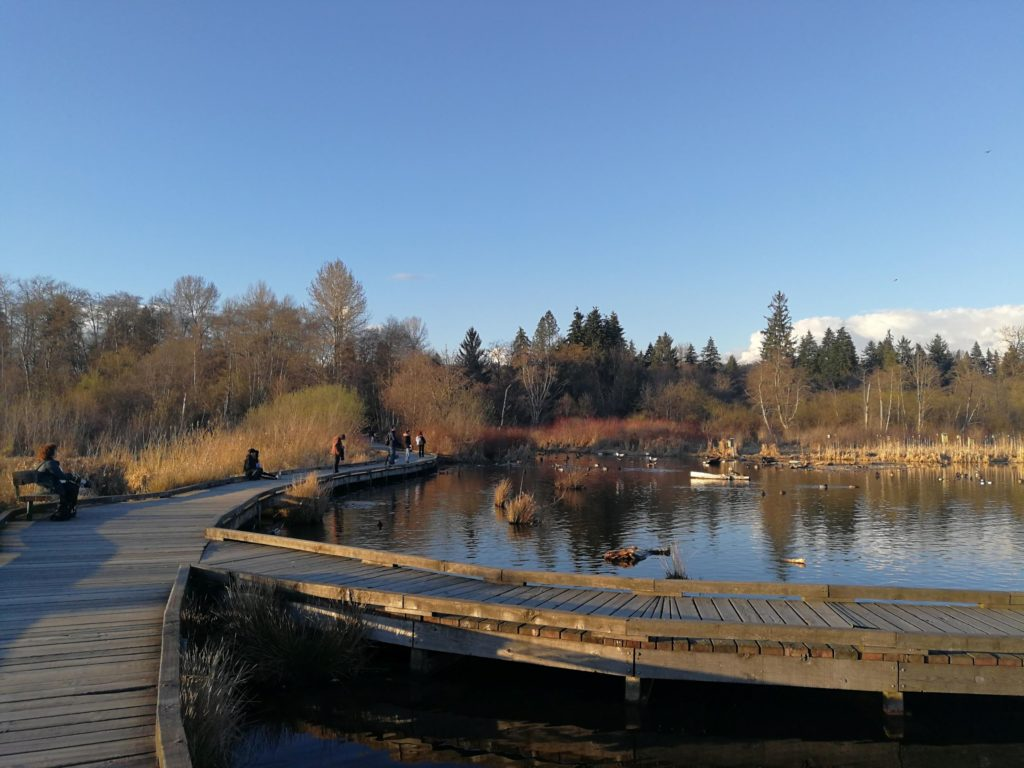 Burnaby Lake Piper Pit Pier