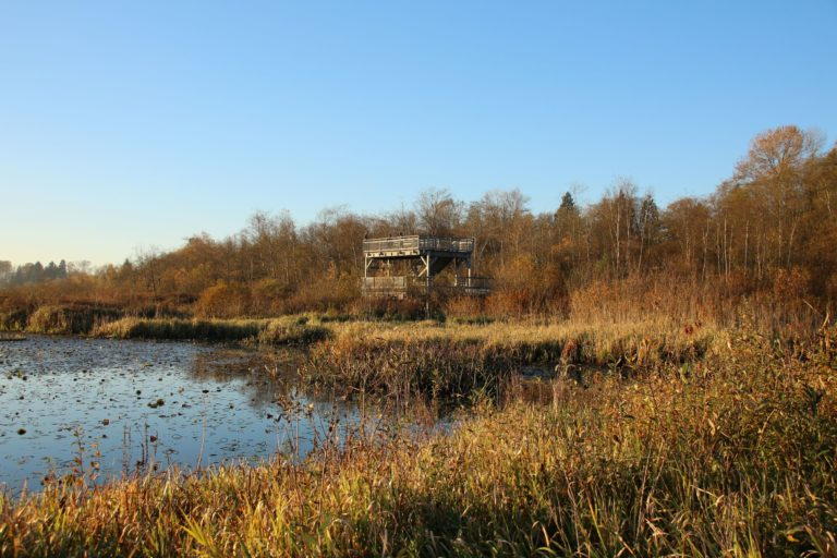 Burnaby Lake Bird Tower