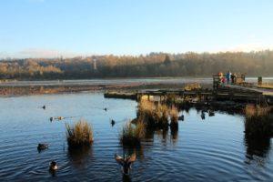 Burnaby Lake Birdwatchers