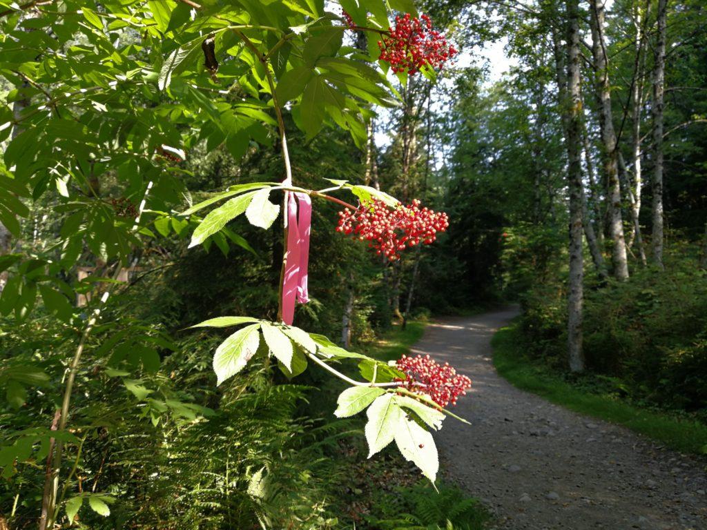 wild berries on Lynn Loop Trail