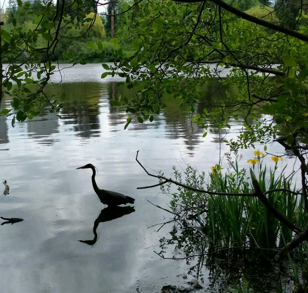 Stanley Park Lost Lagoon
