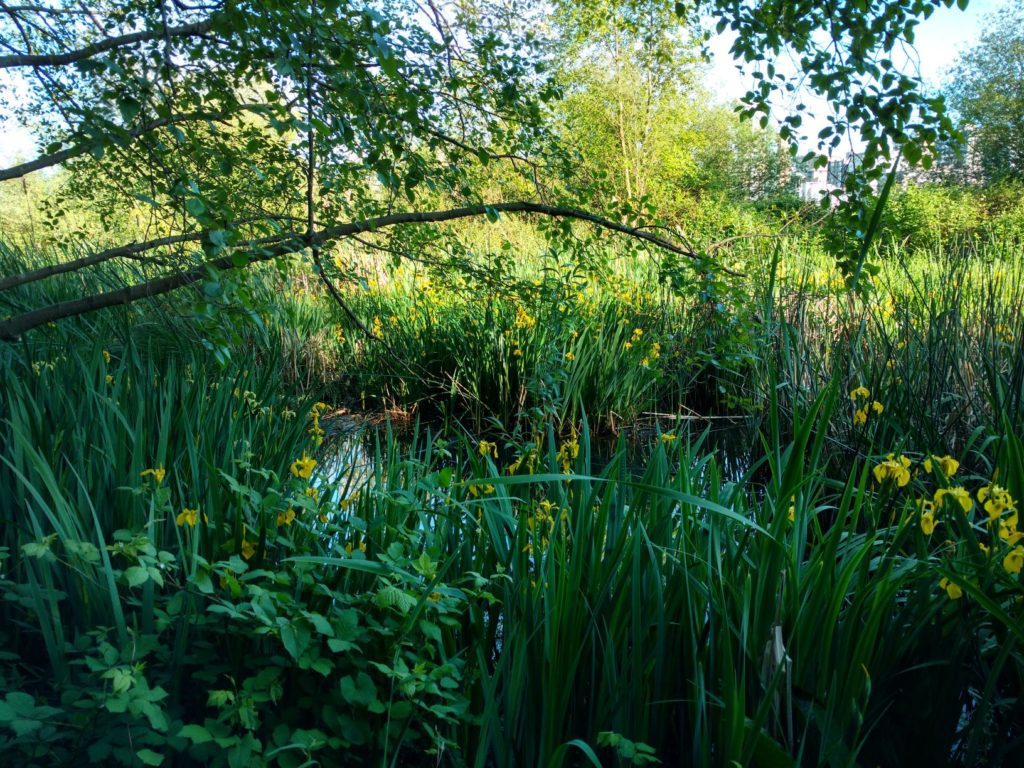 Lost Lagoon Stanley Park