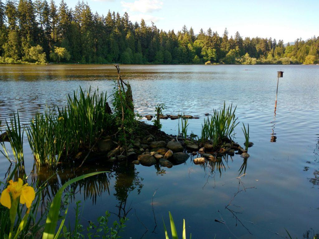 Lost Lake Stanley Park