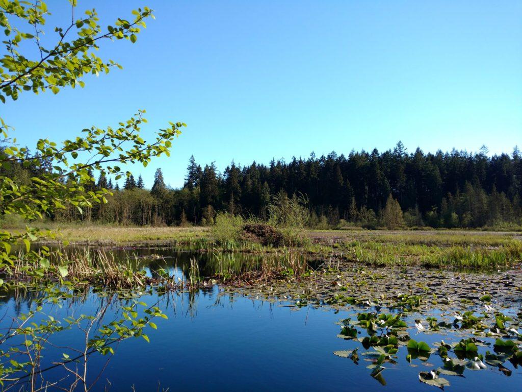 Beaver Lake Stanley Park