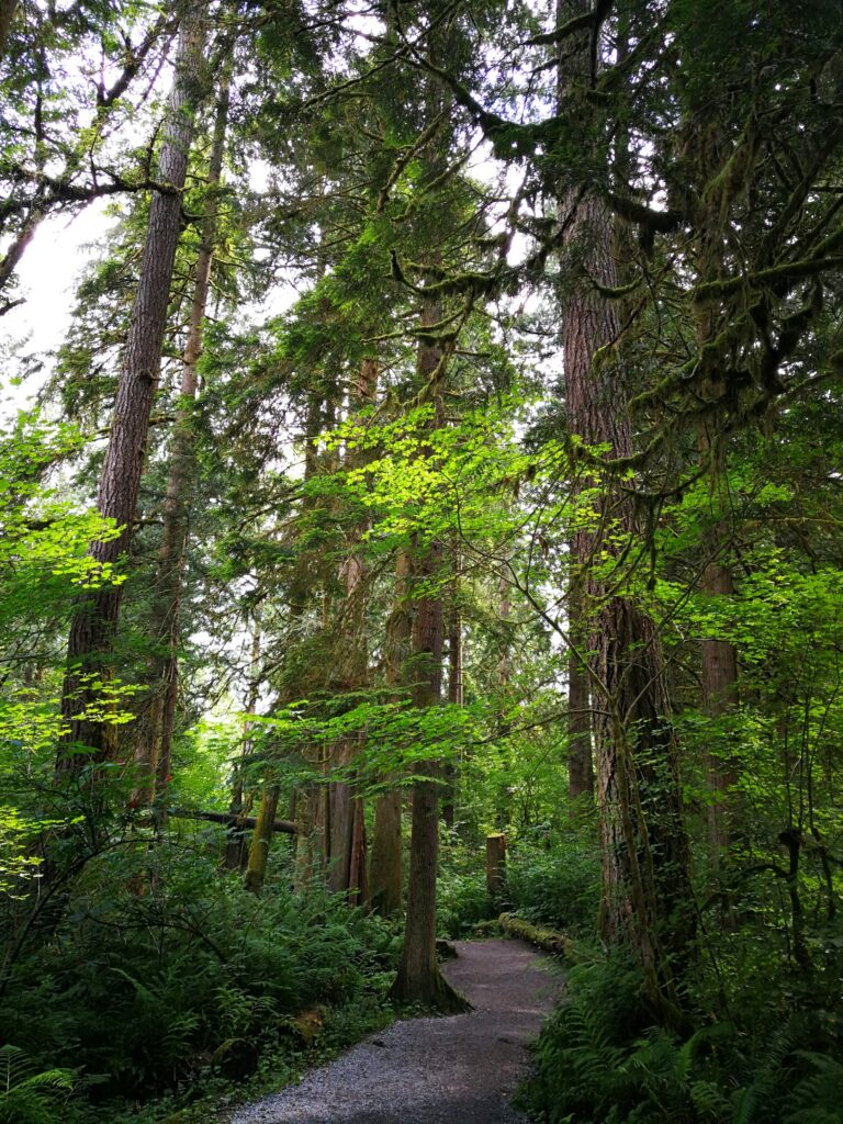 Towering trees on Canyon Trail