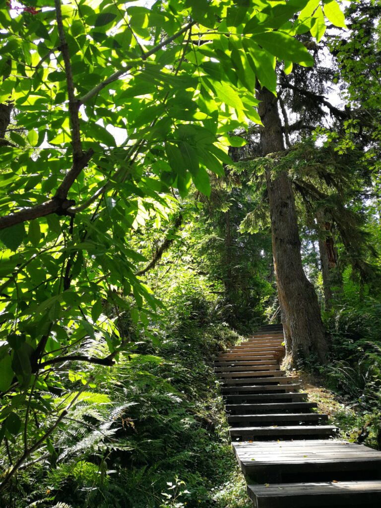 Wooden stairway along the creek leading uphill