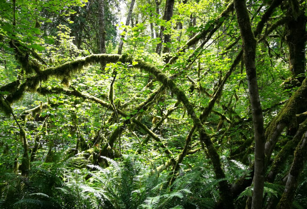 moss covered brushes at Kanaka Creek