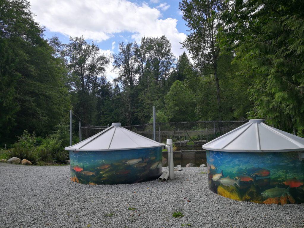 Fish tanks at Irving-Bell Salmon Hatchery