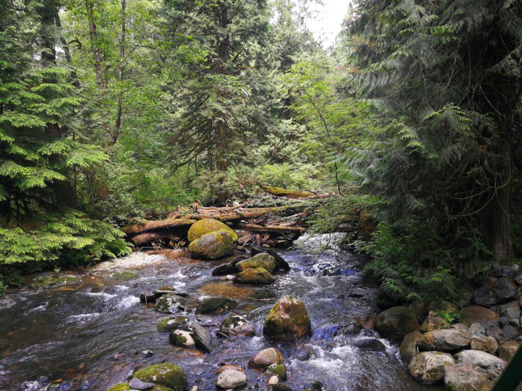 Trees blocking the flow at Kanaka Creek