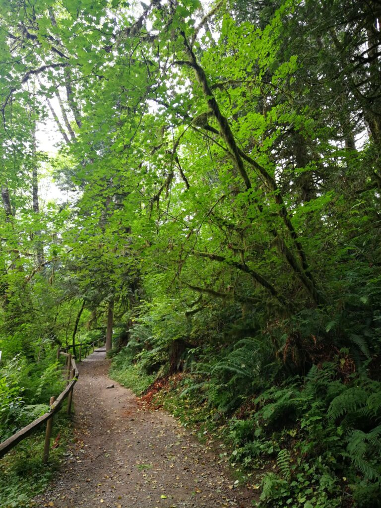 lush green on the trail