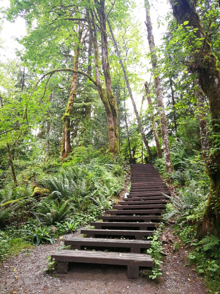 Stairway returning to the Canyon trail