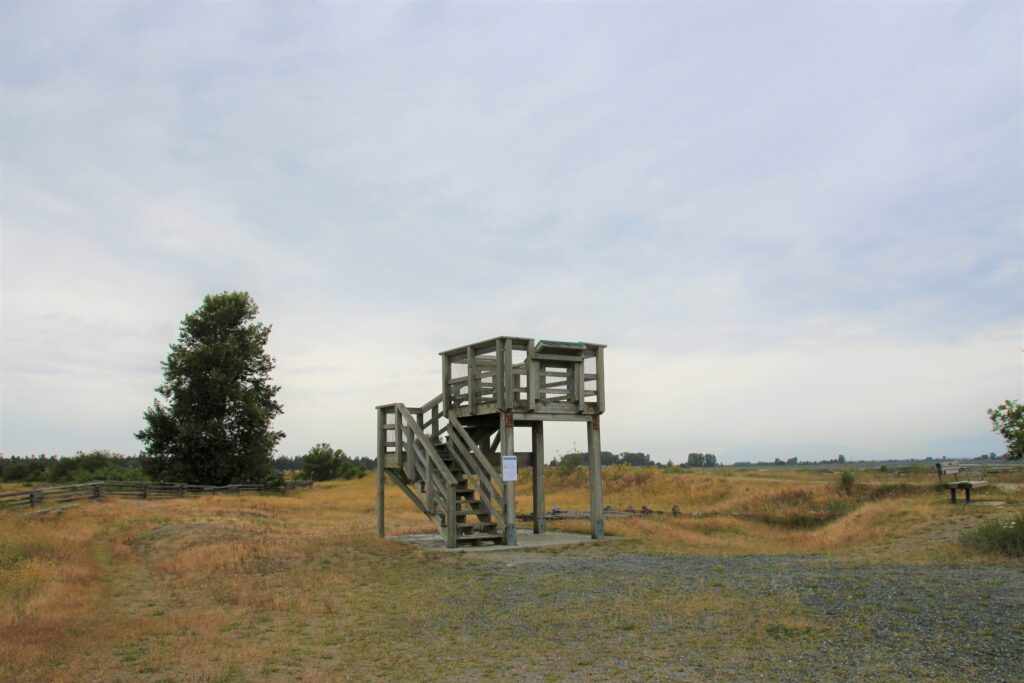 Bird tower Boundary Bay