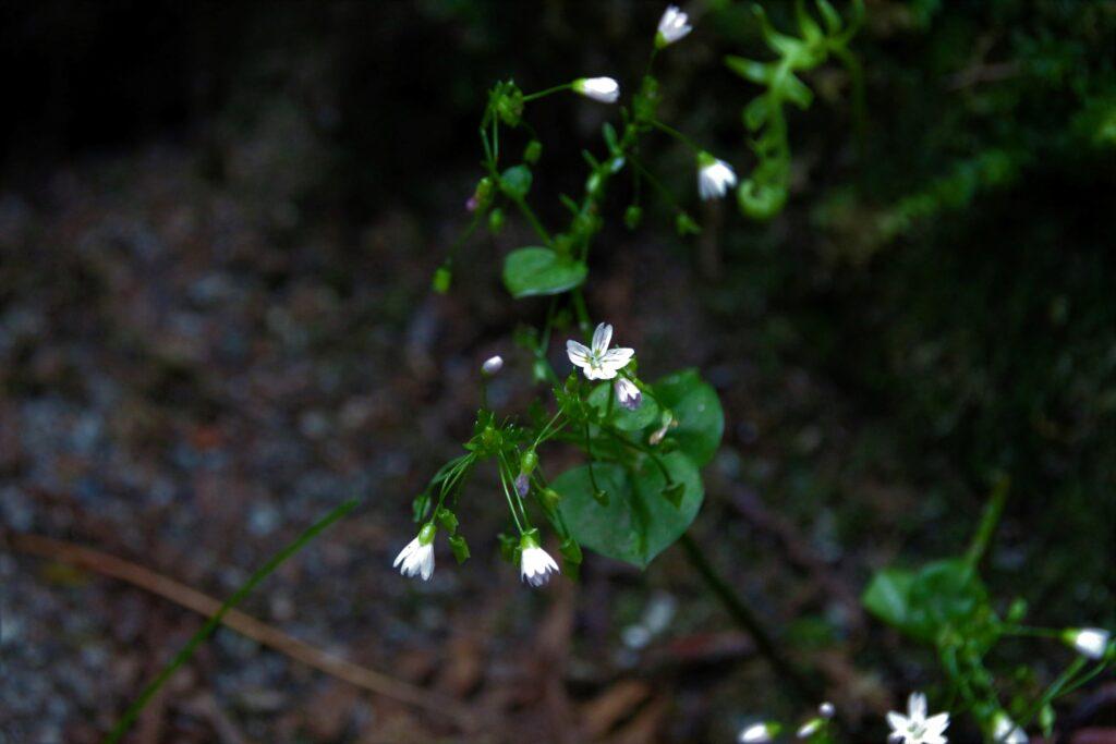 Tiny flowers under the tree