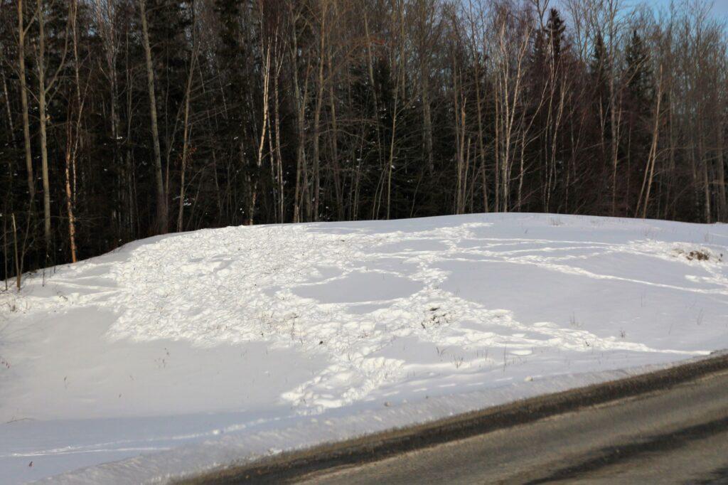 Bison tracks on the snow along Alaska Highway