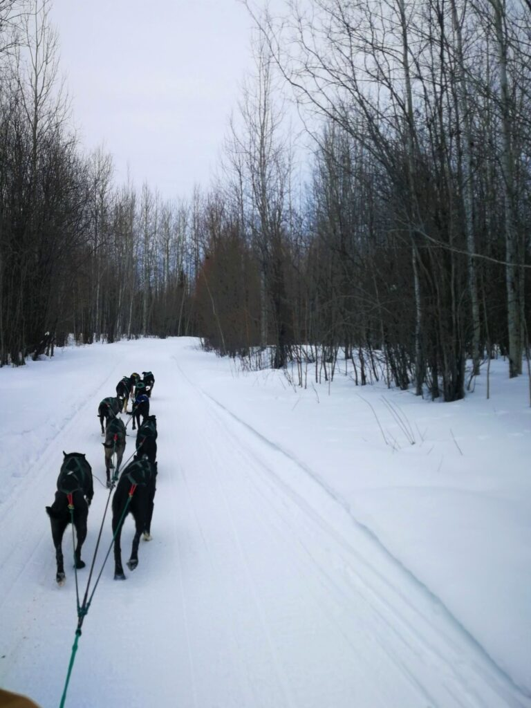 Sleigh dogs running the trail at Fort Nelson