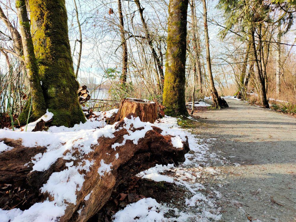Fallen tree becomes nurse log