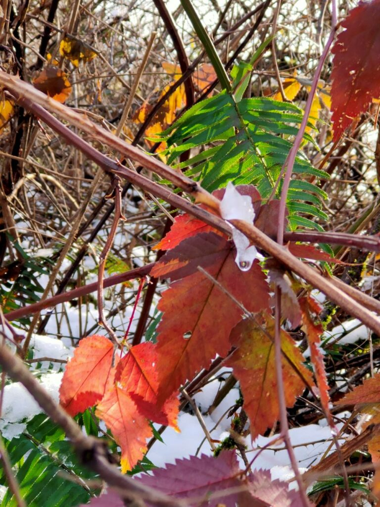 Colourful leaves remained in winter