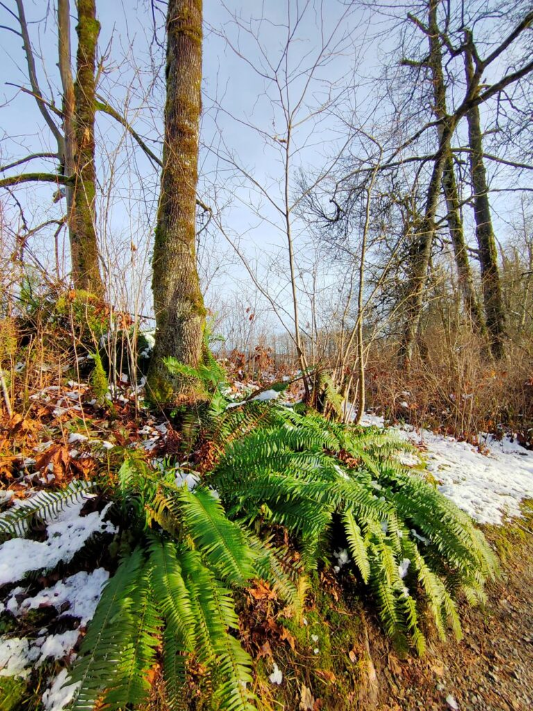 Ferns grow well in winter by the river front