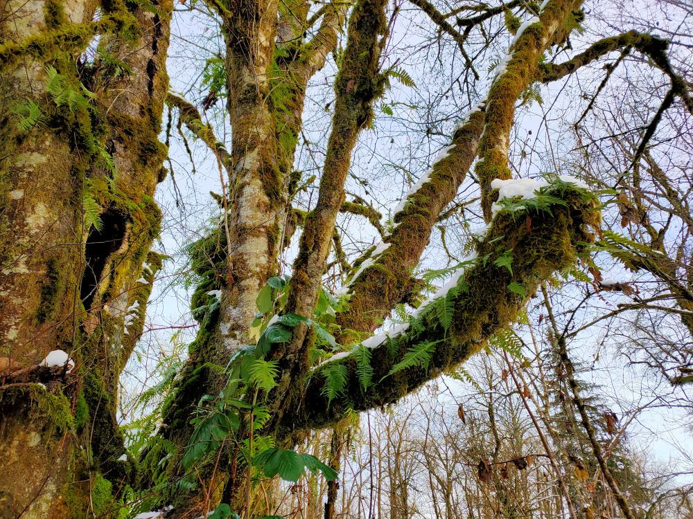 Vegetations growing on tree trunks like hanging basket