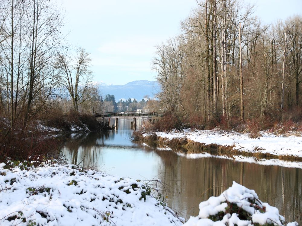 Pedestrian Bridge at the end of the Kanaka Creek at the confluence of Fraser River