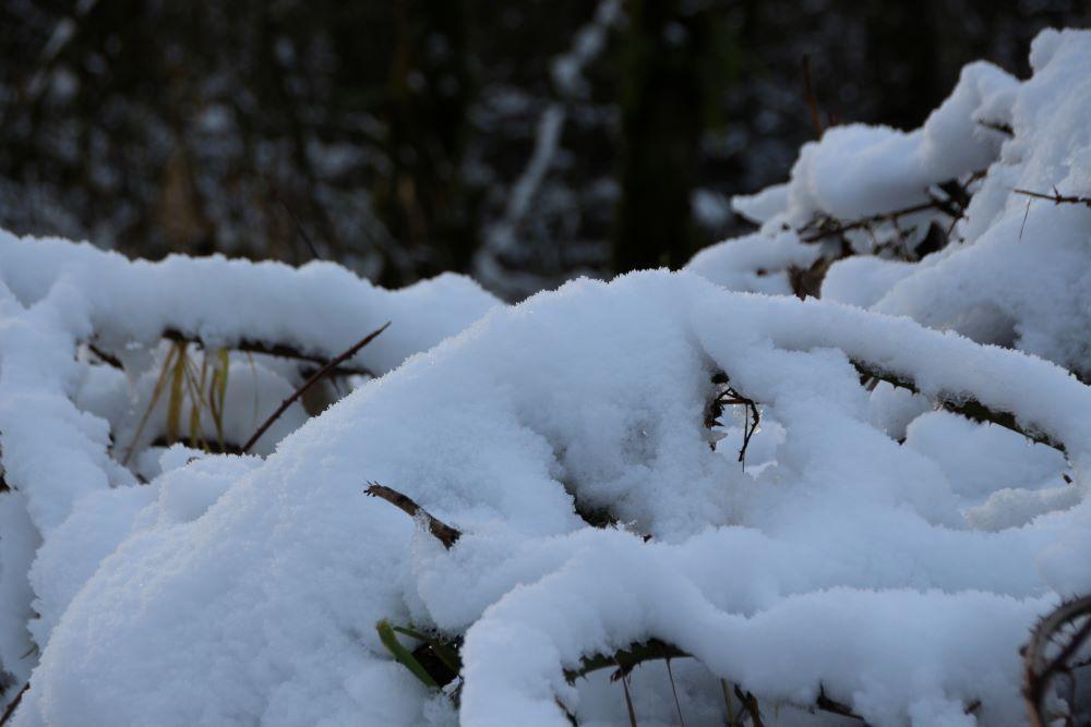 Snow-covered vegetations