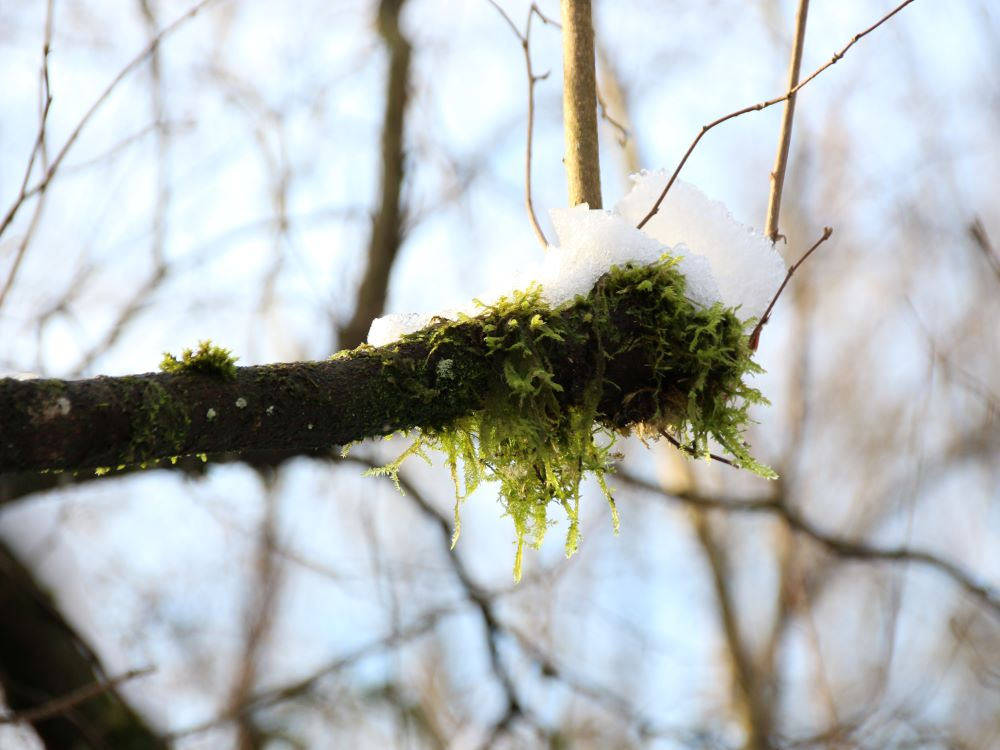 Moss covered tree branches