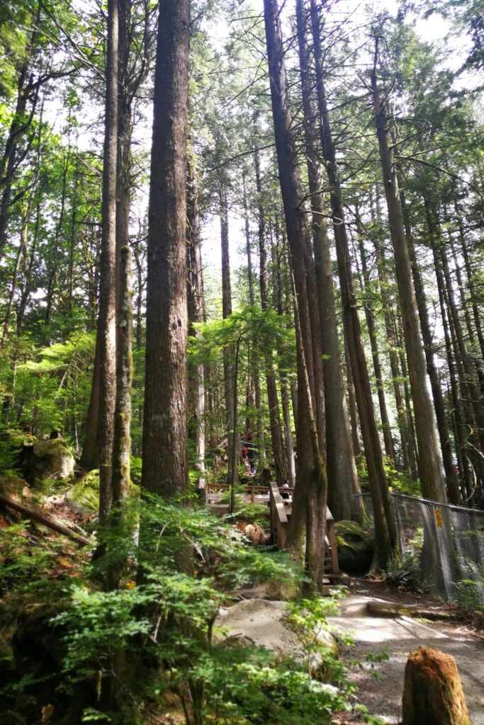 Second growth forest at Cascade Falls