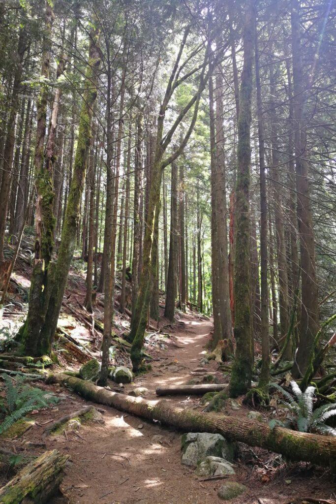 Upper Cascade Falls Trail