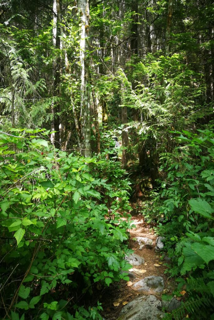Trail leading to Cascade Creek
