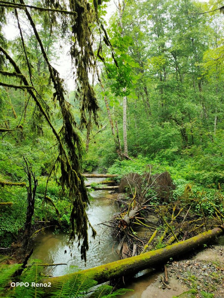 fallen branches and tree trunks on the creek