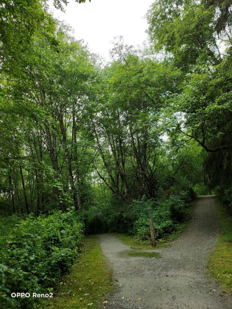 Hatchery Loop Trail at Tynehead