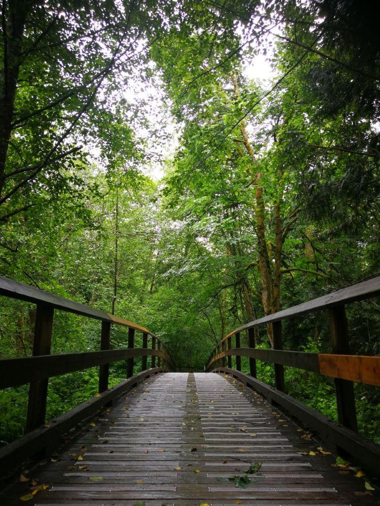 The bridge over Serpentine River