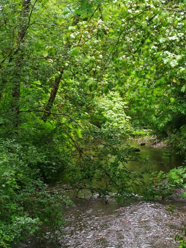 Serpentine River at Tynehead Park