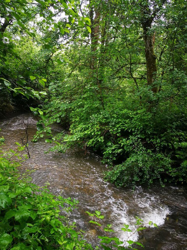 Serpentine River rushing water