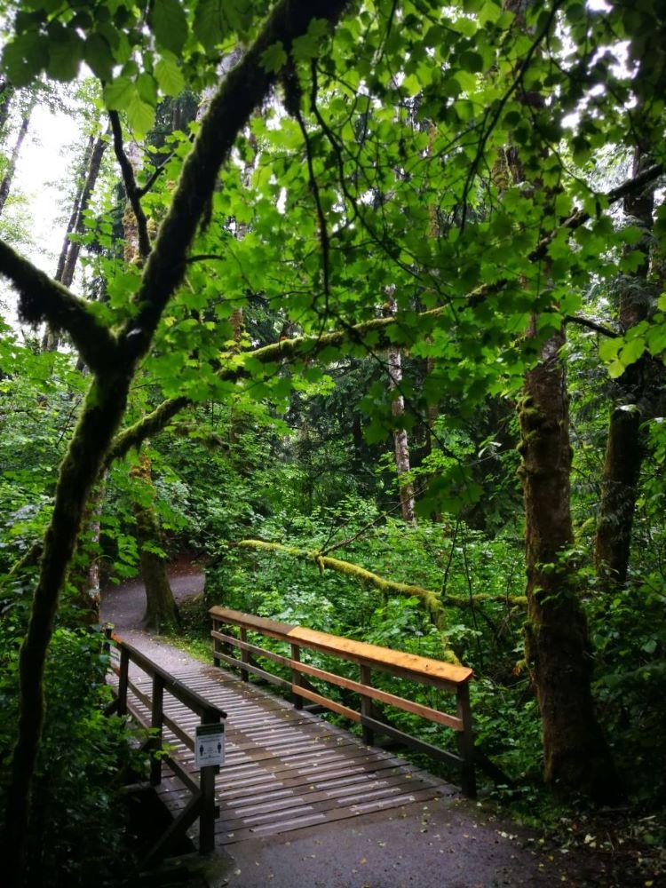 A wooden bridge over a creek