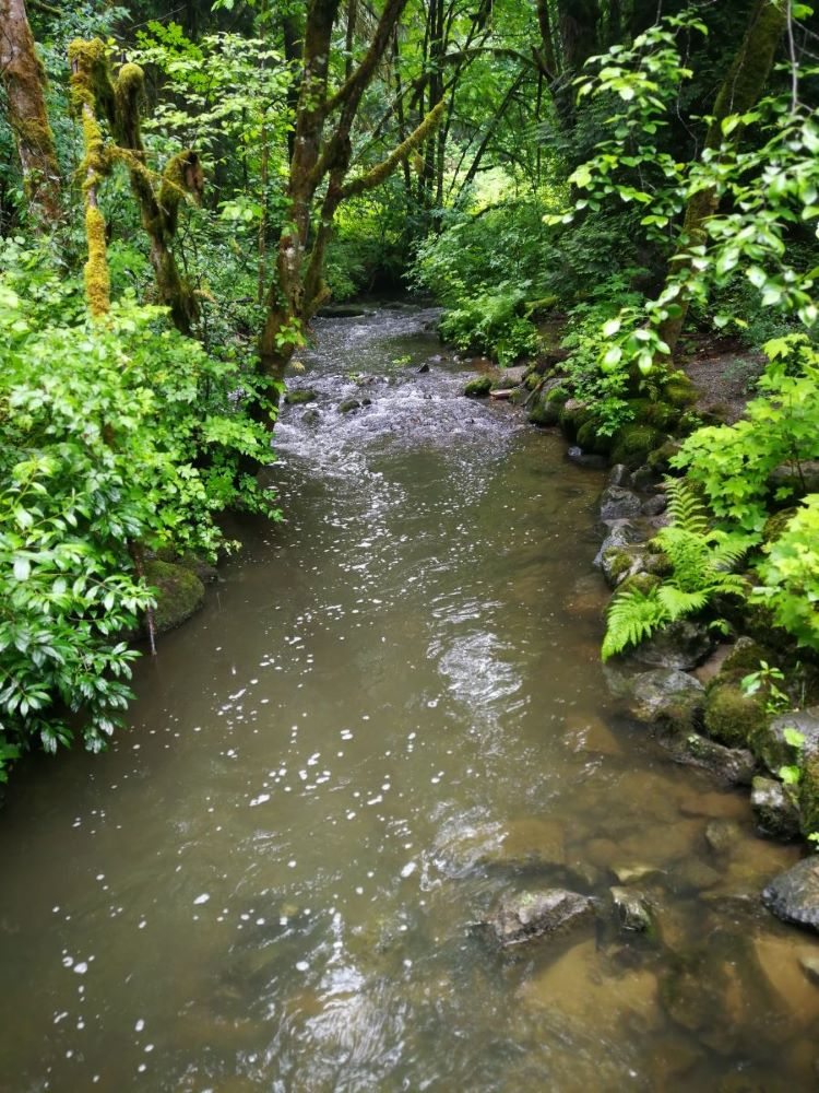 Serpentine River run through bushes