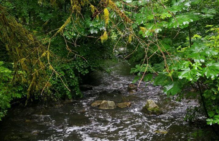 Serpentine River at Tynehead Regional Park