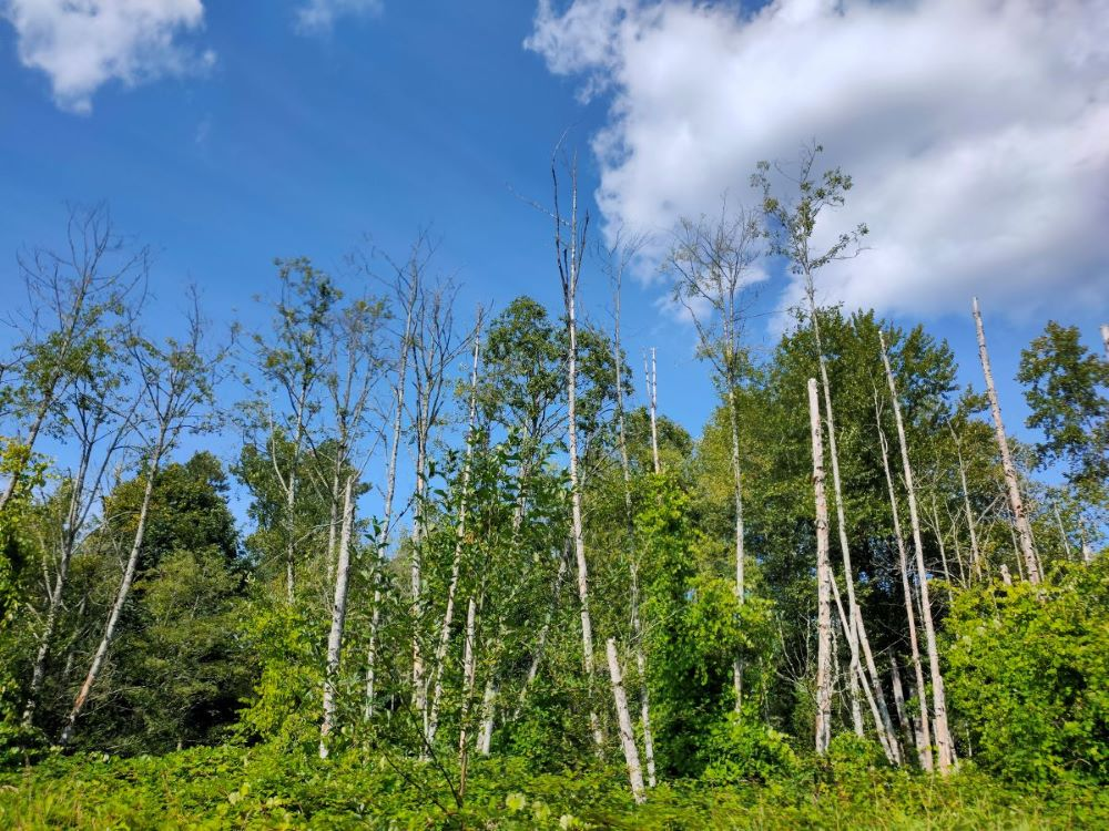 forest and brushes at Tynehead Park