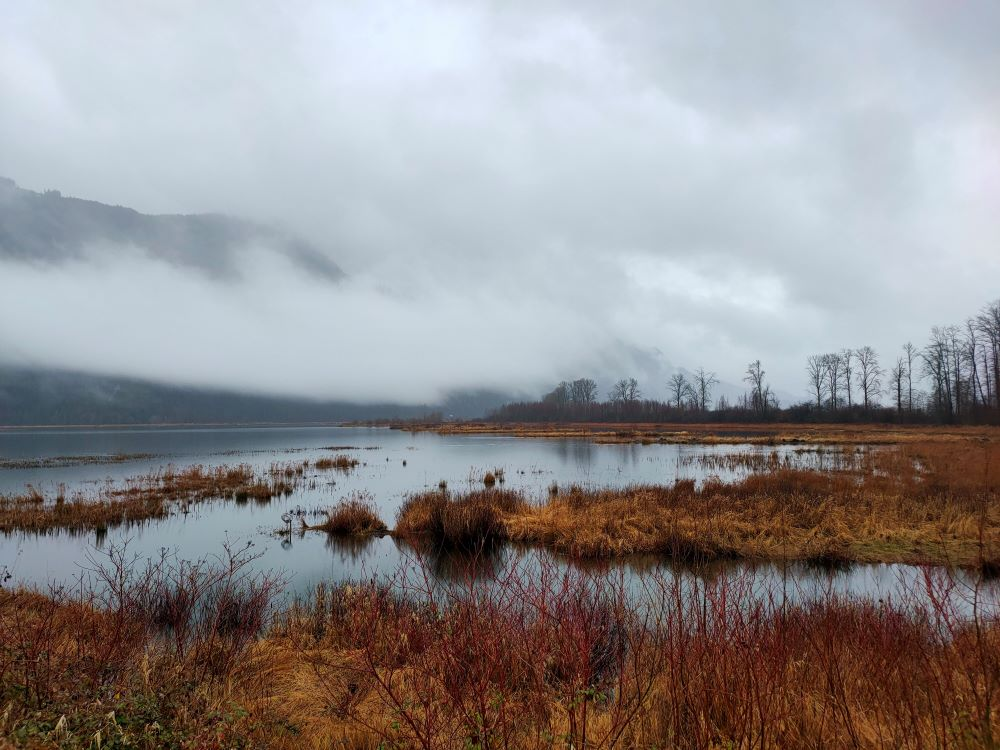 Marshland with misty mountains in the background