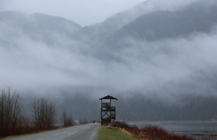 Pitt Lake bird tower