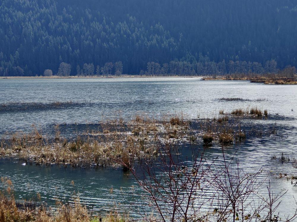 Shimmering water at the marshland