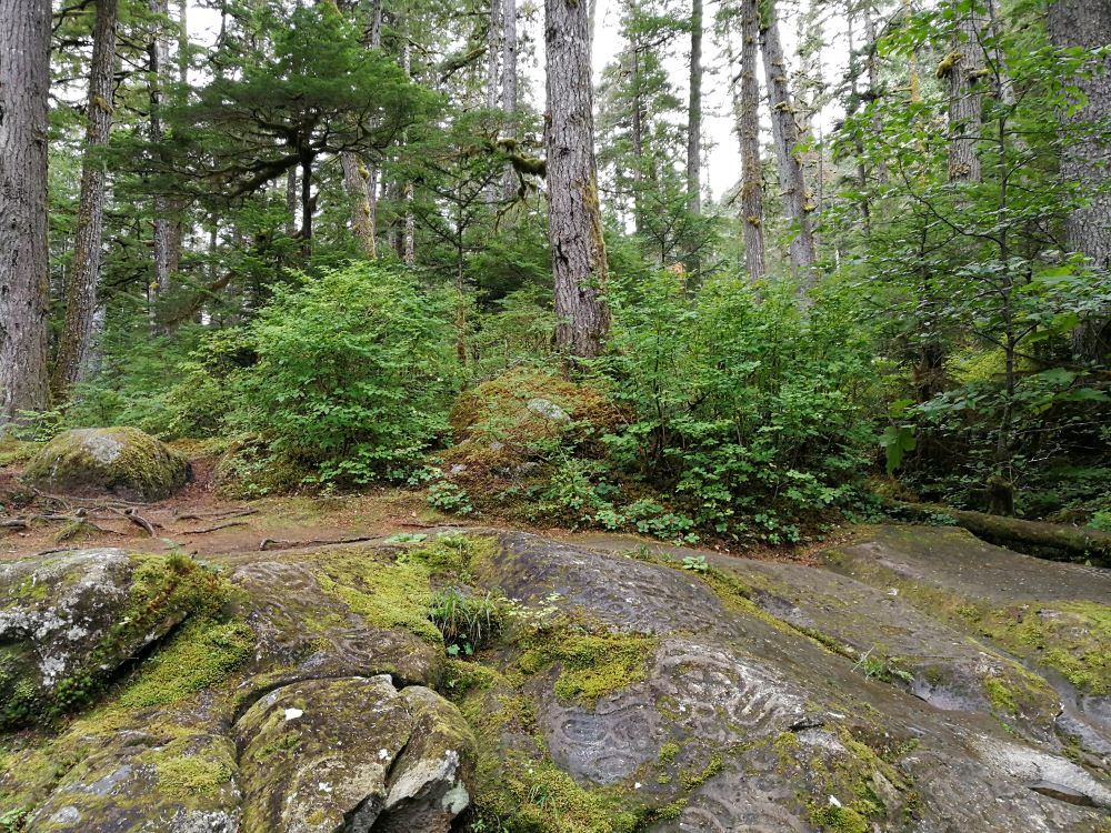 The sacred land of Nuxalk People, where ocks and forest floors covered in ancient petroglyphs