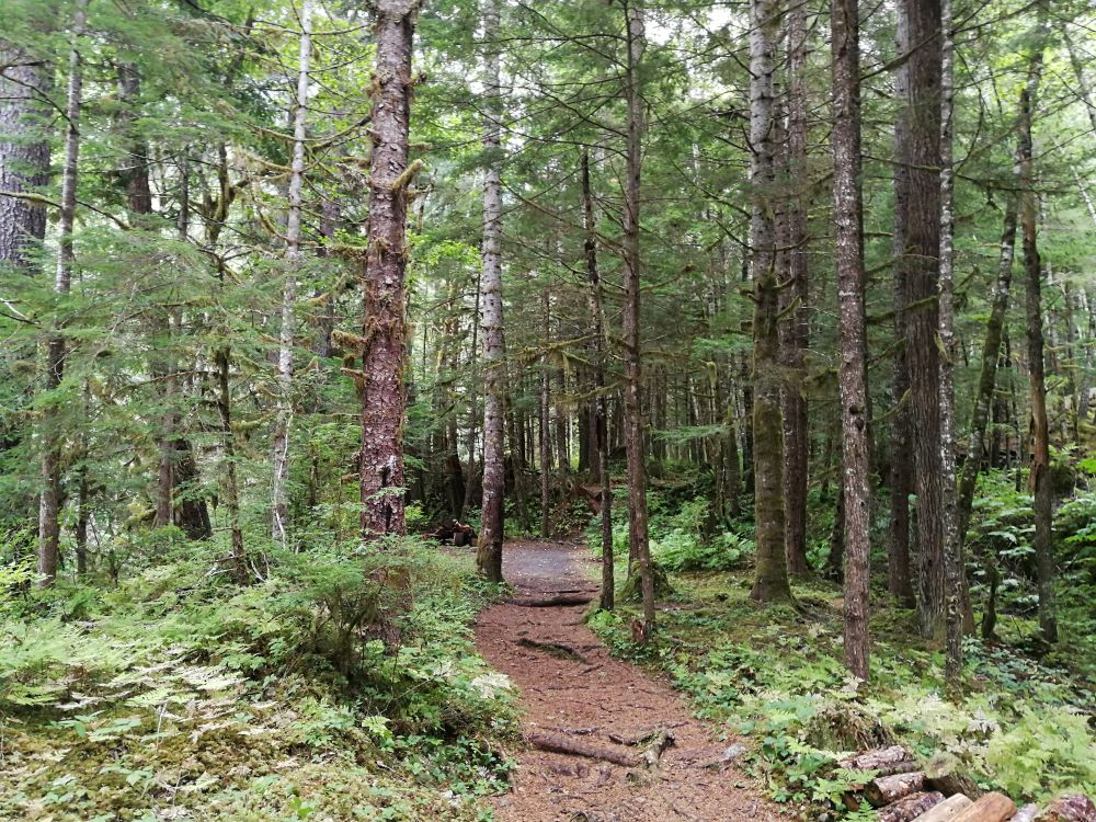 Trail in the forest with a giant boulder ahead